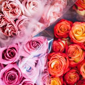 Van rozengeur tot prikkeldraad en terug